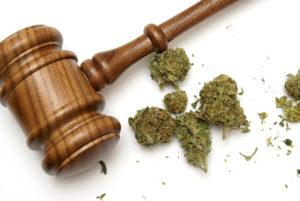 parent_marijuana_child_custody